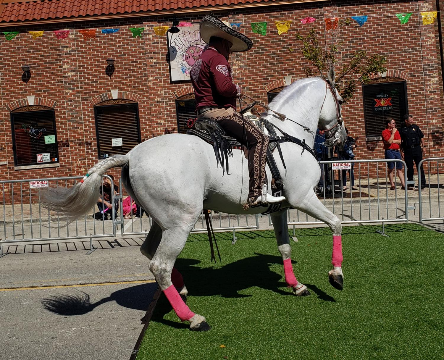 Dancing horses open the Mexican Independence Day event in downtown West Chicago on Sept. 14.