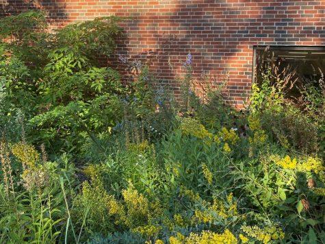 Club Greens butterfly garden.